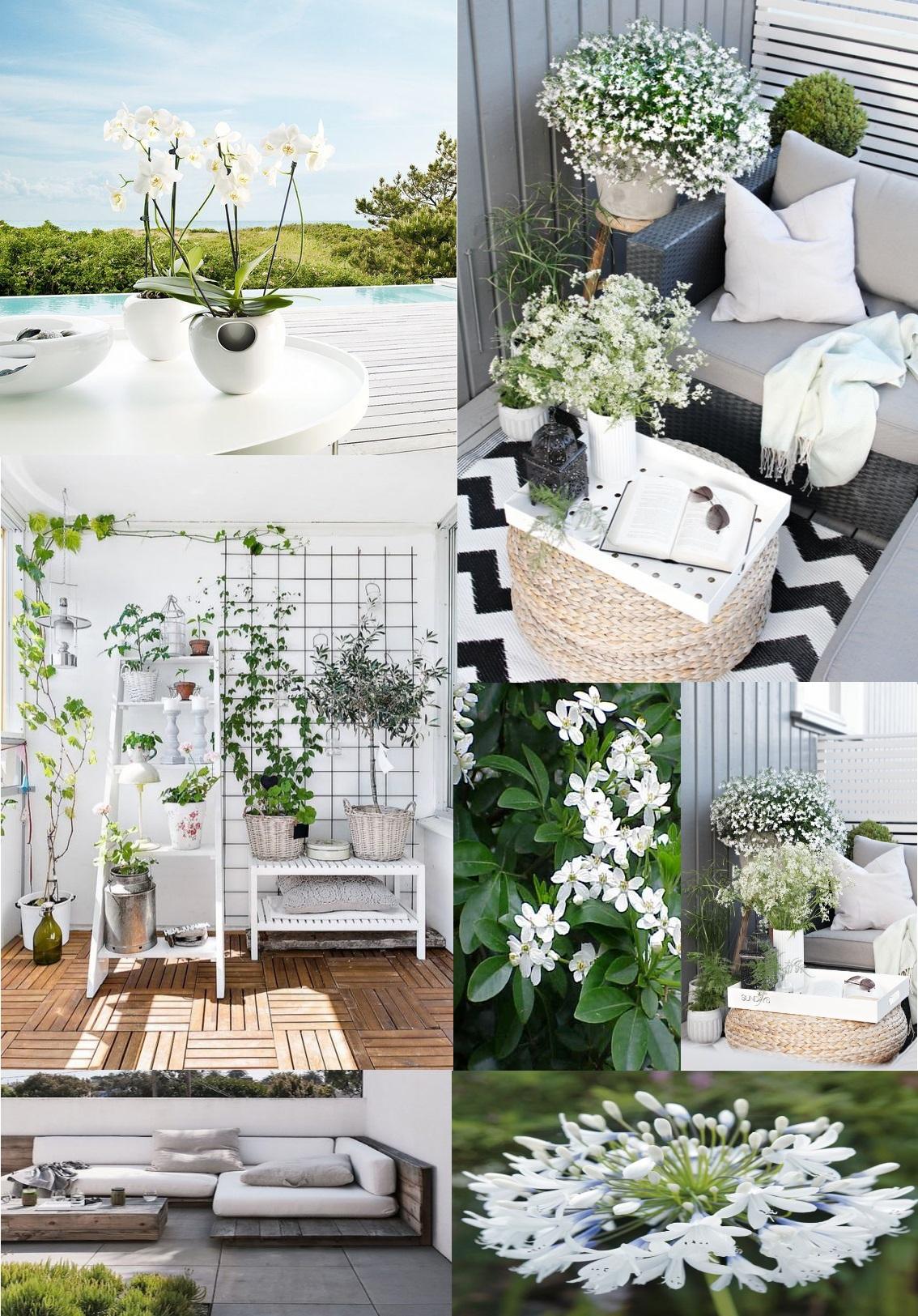 plantes zen exterieur des petits jardins suspendus ou des plantes zen voici la nouvelle. Black Bedroom Furniture Sets. Home Design Ideas