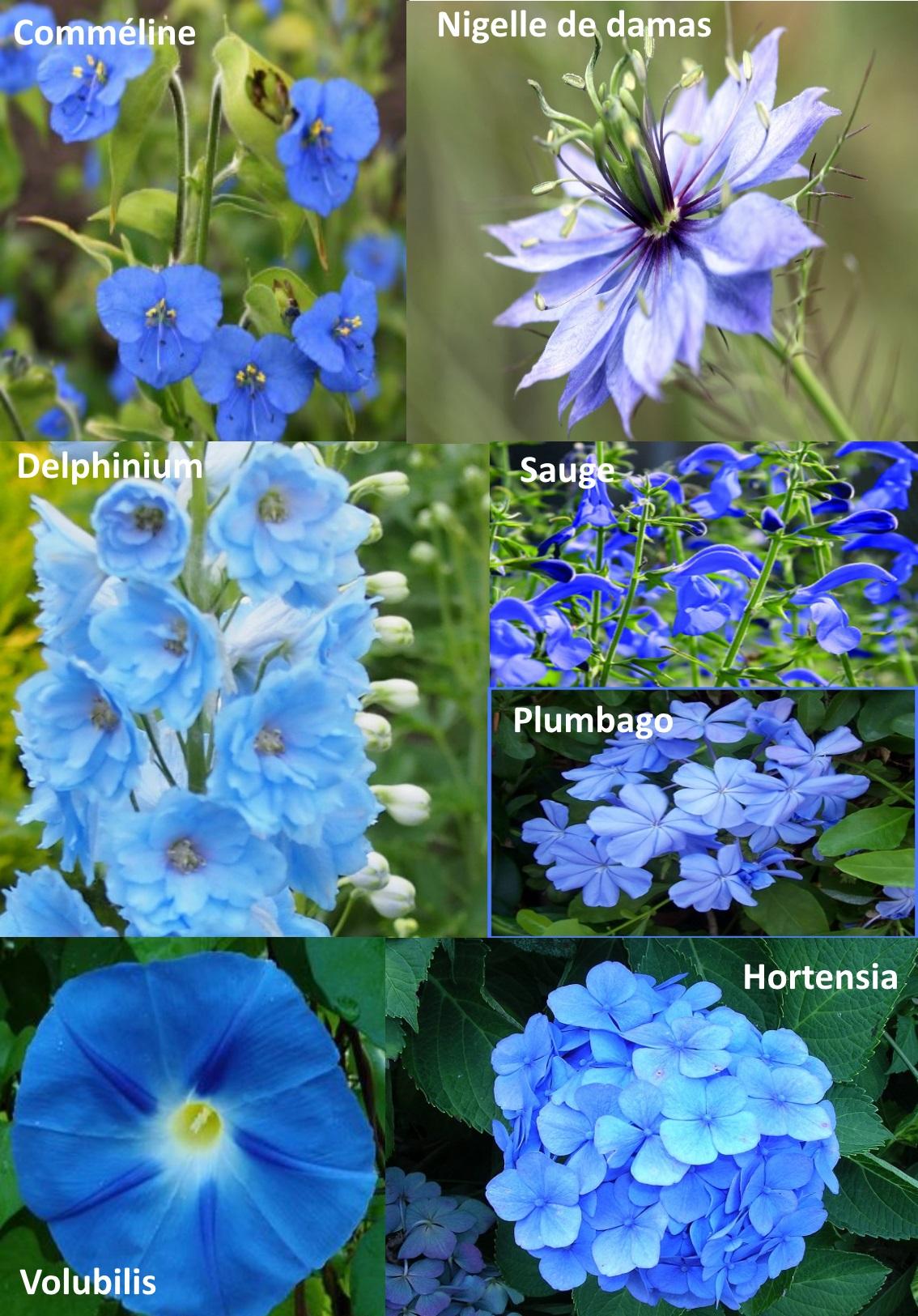 bleu pl